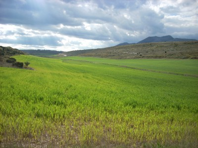 paisagem64