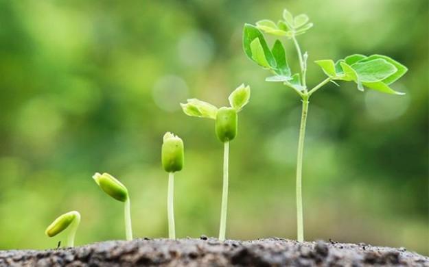 Resultado de imagem para consciencia vegetal