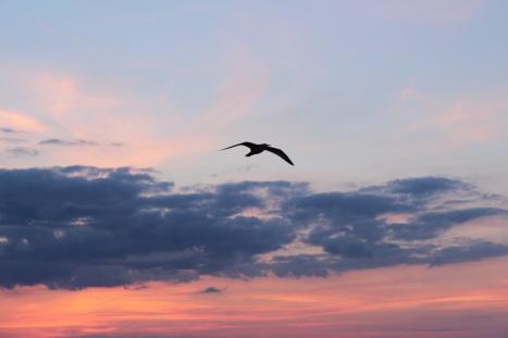 seagull-2728264