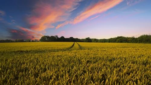 countryside-2326787