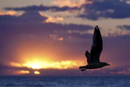 seagull-1626449